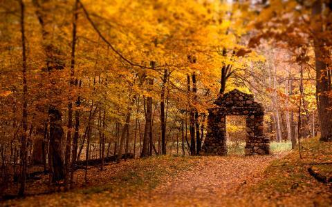 黄色的秋叶