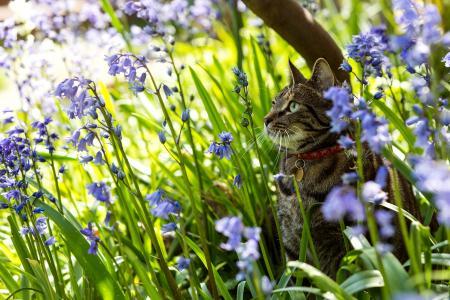 领子里的灰色猫咪坐在蓝色的花朵