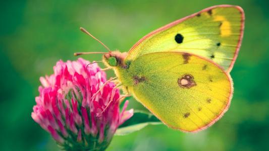 在领域的蝴蝶