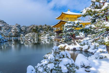 在冬天,日本,金阁寺附近的冰雪覆盖的树木和冰冷的池塘