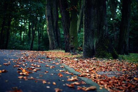 秋天的树叶在沥青上