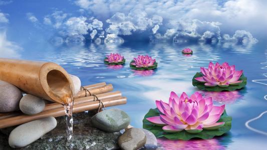 梦幻般的睡莲在蓝天下的水中