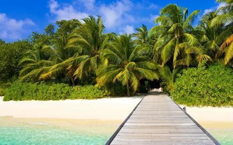 棕榈树在沙滩上