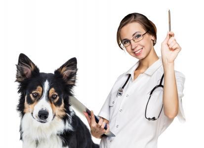 女医生与狗博德牧羊犬在白色背景上的兽医