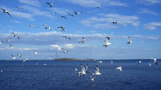 一群海鸥在海面上