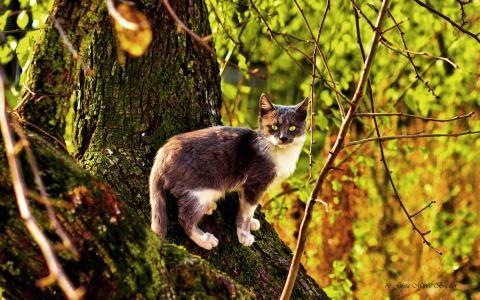 一棵树上的三色猫在秋天