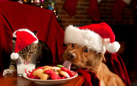 在节日的餐桌上,新年装扮成狗和猫