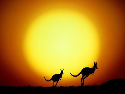袋鼠在太阳的背景中