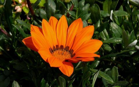 气体特写镜头橙色花