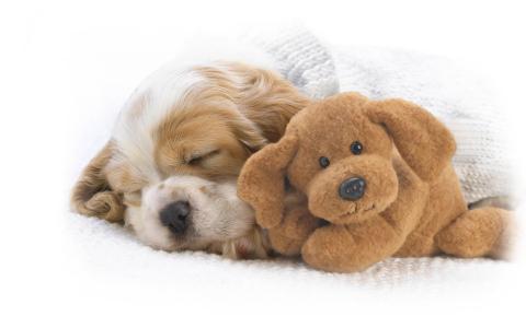 与玩具的狗