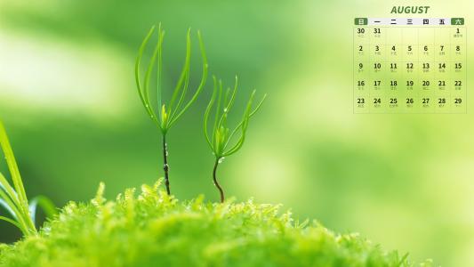 2020年8月小清新绿植日历