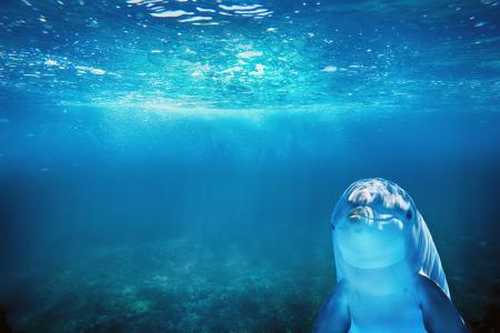 蔚蓝海水下的可爱海豚