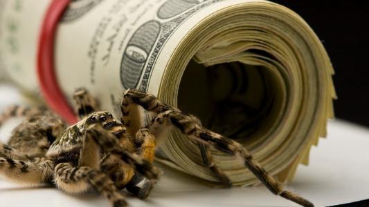 蜘蛛和美元的包