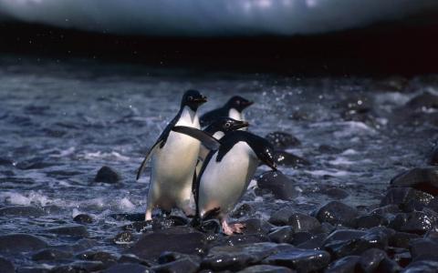 在岩石上的企鹅