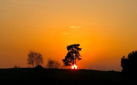 太阳躲在树后的地平线后面