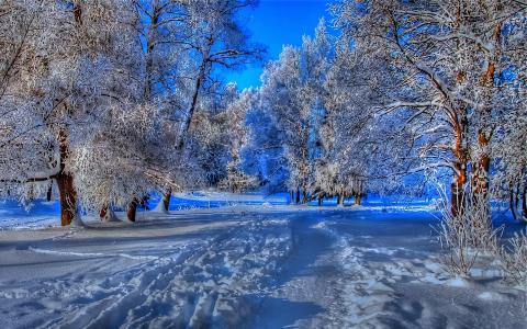 在冬季森林中的路径