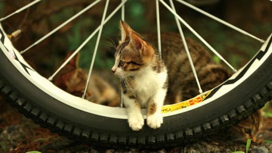 小猫在自行车车轮上