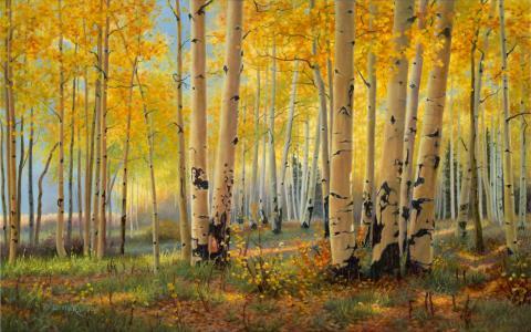 桦树树丛在秋天