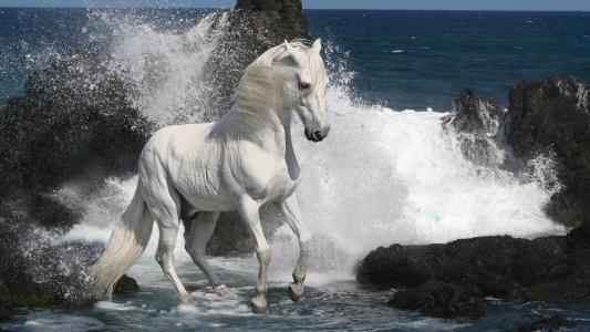 在海滩上的白马