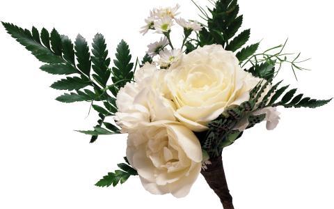 白玫瑰花束与雏菊和大绿色叶子在白色背景上