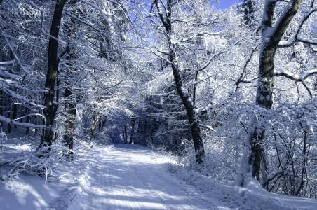 冬天路在雪白的森林里