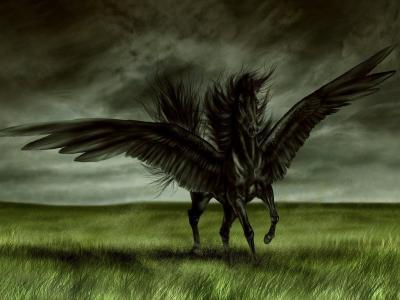 黑色的翅膀