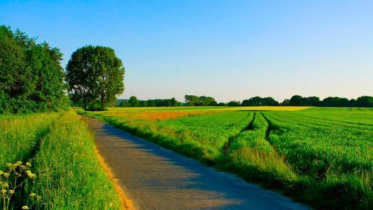 在整齐的夏季田野的路
