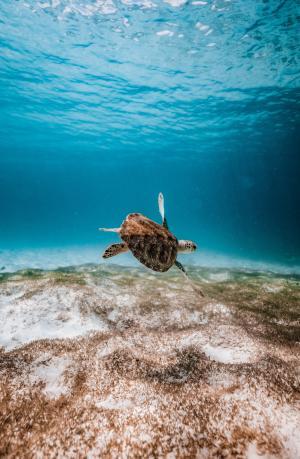 海洋里的海龟