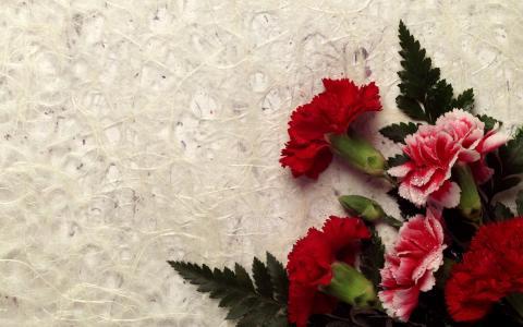 康乃馨装饰