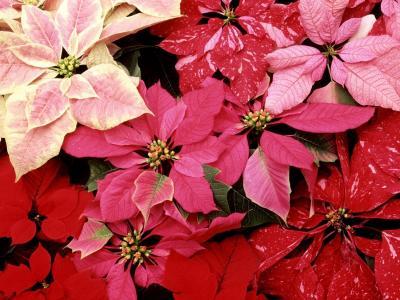 红色的花朵