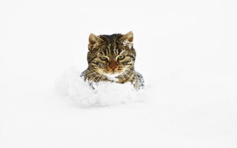 猫在雪地里