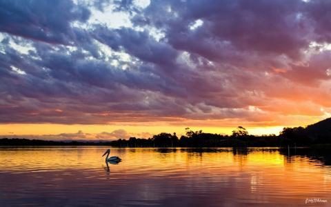 一只鸟,一个湖的日落