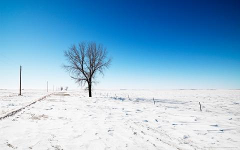 寂寞在雪地里