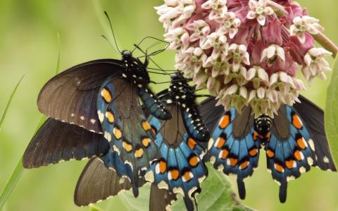 蝴蝶飞向花朵