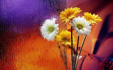 花瓶里的非洲菊