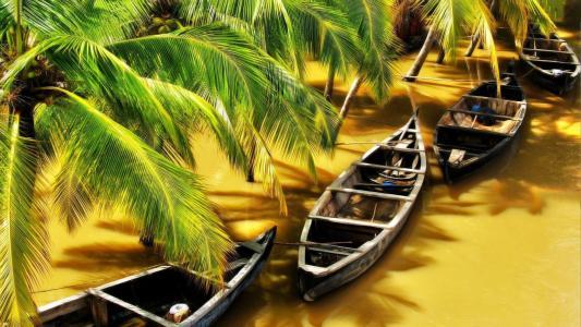 小船在棕色的河上的棕榈树下