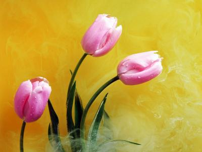 黄色烟雾中的粉红色花朵