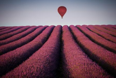 气球在薰衣草的领域