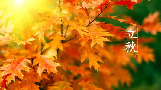 24节气关于立秋的图片