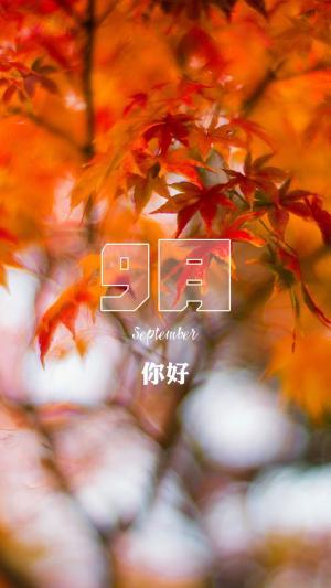 九月你好唯美枫叶