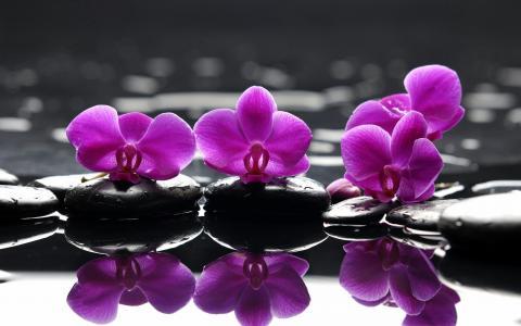 在石头上的粉红色的兰花