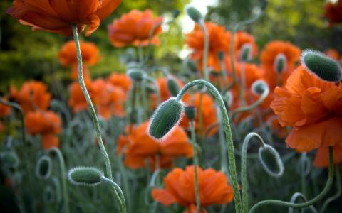 在杰克逊公园的花