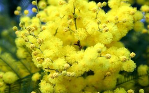 黄色的花朵在春天