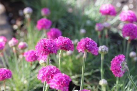 在花园里种植军械库的鲜花