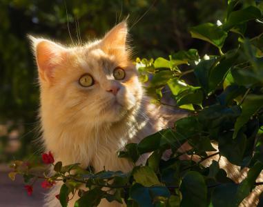 美丽的红猫在阳光下