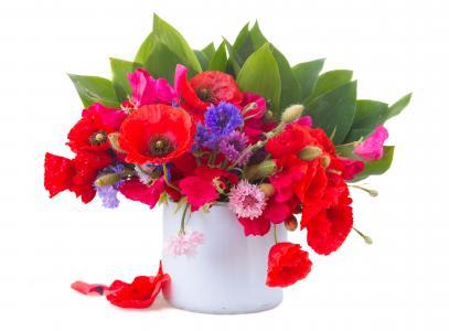 一束领域矢车菊和红色罂粟花在白色背景上的花瓶里