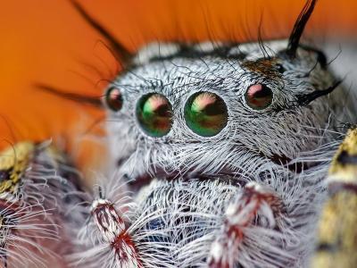 蜘蛛的眼睛
