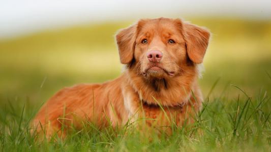 红色的狗和绿草