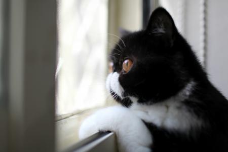 猫望着窗外
