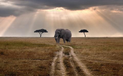 一头大象在路上